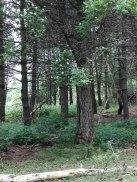 a8 foto 5 bosco